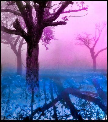 L'esprit des arbres