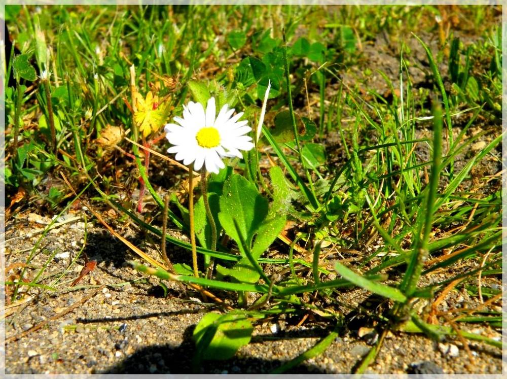 L'essentiel est de garder les pieds sur l'herbe.