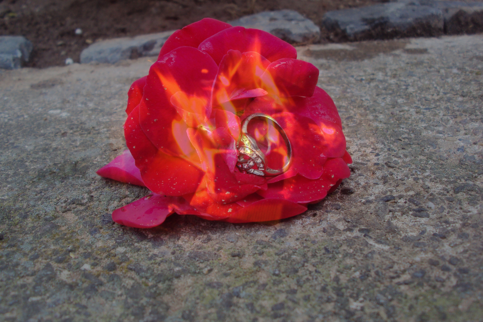 Let my Love burn