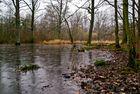 l'étang d'Or, Rambouillet
