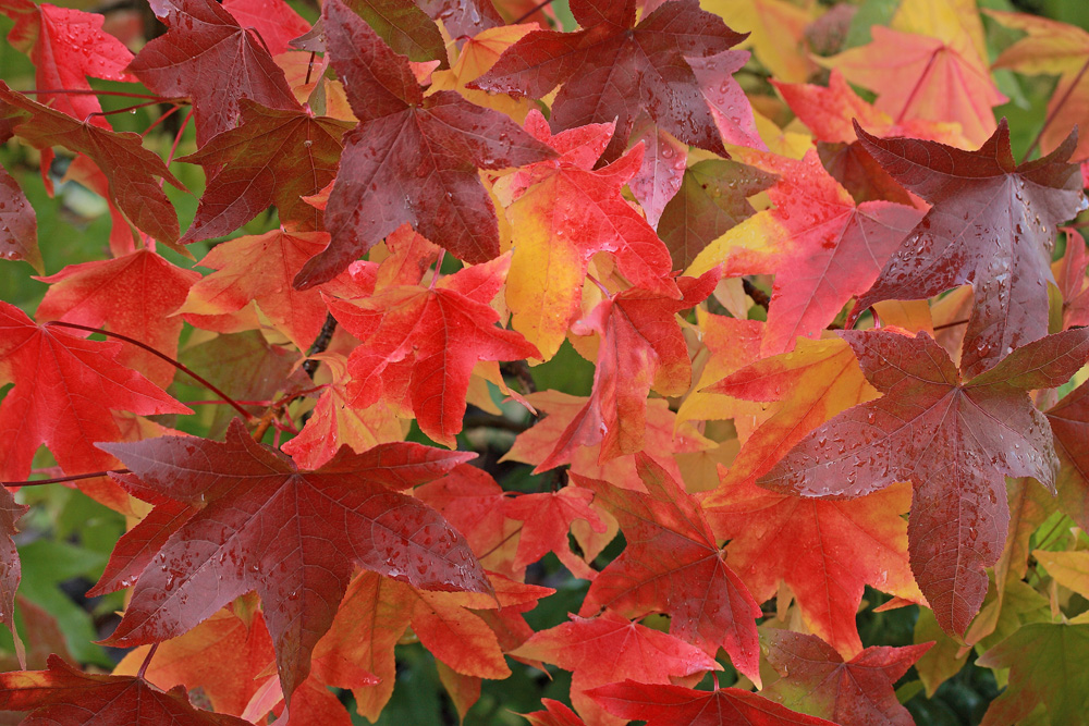 L'été n'est plus, vive l'automne - 2