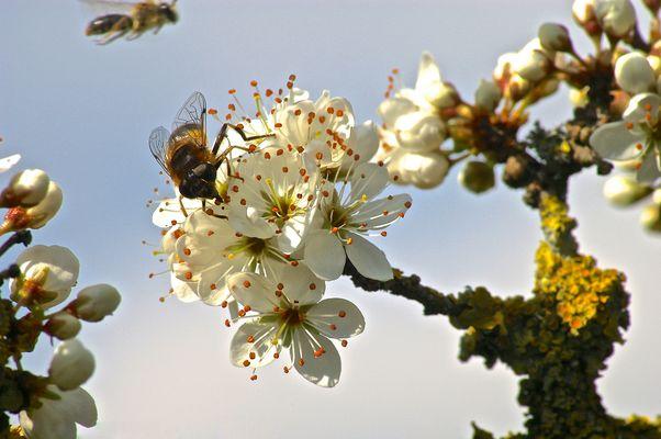 L'éternel printemps