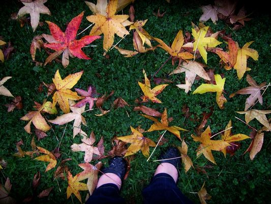 L'éternelle beautée d'automne*