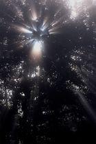 L'étoile arborée