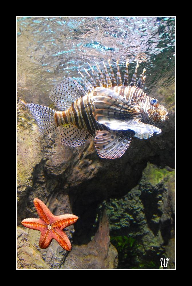 l'etoile et le poisson