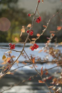 Letzer Sonne für die Früchte