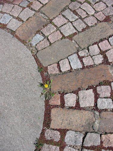 letzte Blüte vor der Autobahn