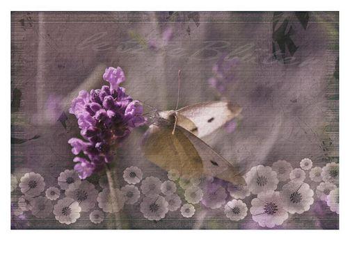 letzte Blüten...