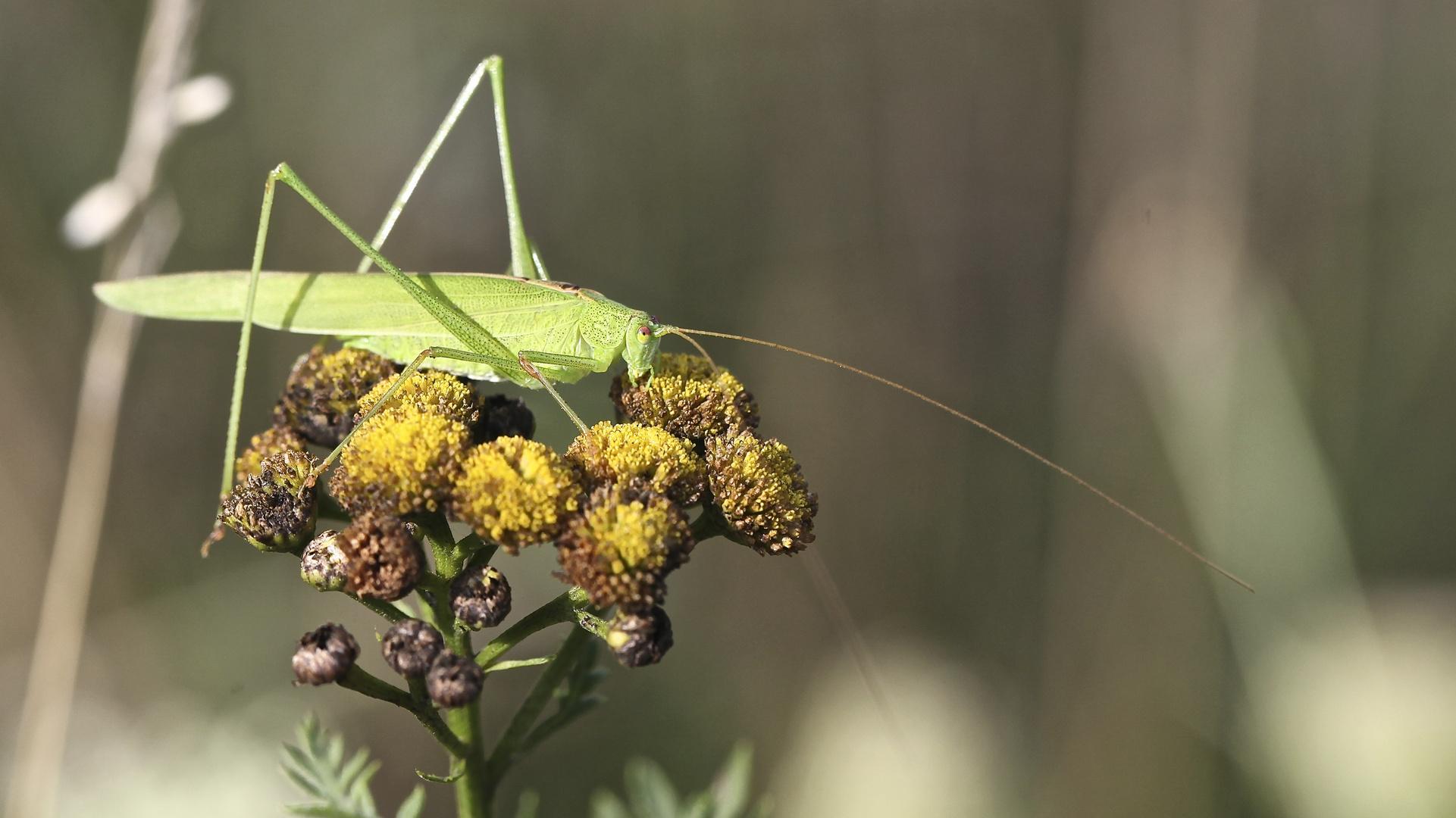 Letzte Blütenreste und Insekten am Herbstbeginn