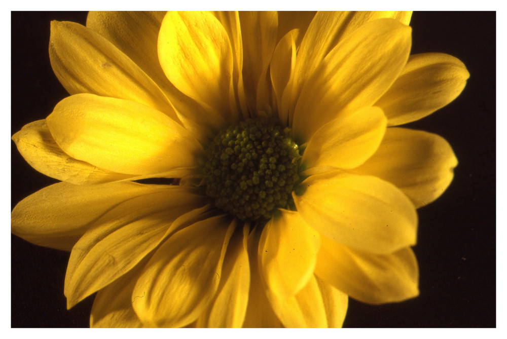 Letzte Blume