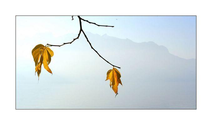 Letzte Herbstboten