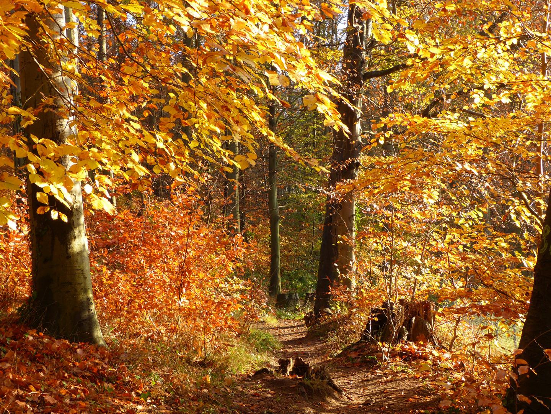 Letzte Herbstfarben