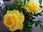 Letzte Rosen diesen Jahres ...