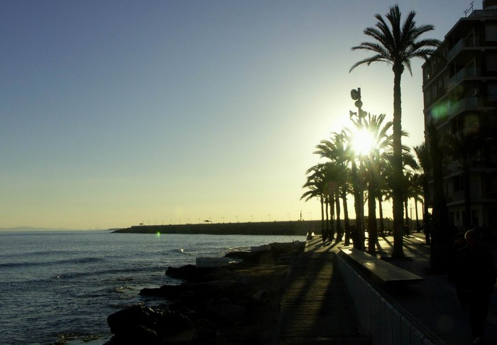 letzte Sonnenstrahlen hinter Palmen