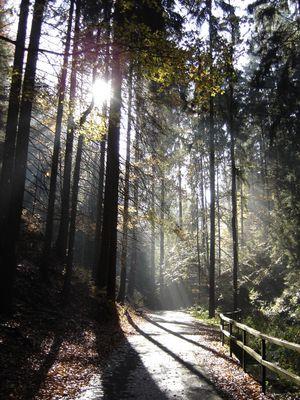 Letzte warme Sonnenstrahlen im Herbstwald
