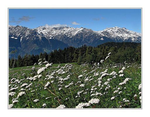 Letzte Wiesenblumen des Spätsommers/Frühherbstes