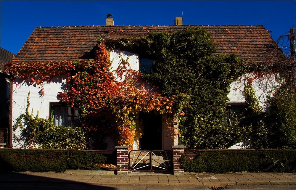 (letzter) Herbst in Heuersdorf