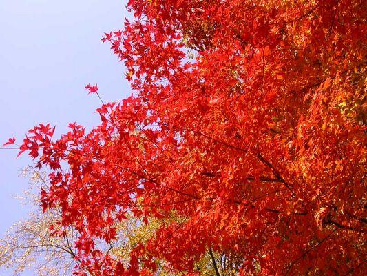 Letzter Herbsttag