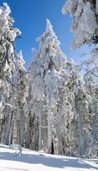 Letzter Rauhreif - Wintergrüße aus Thüringen