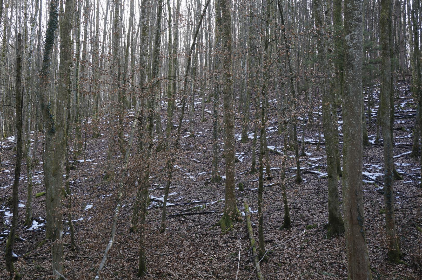 letzter Schnee zwischen Bäumen