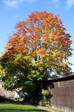 letzter schöner Herbsttag