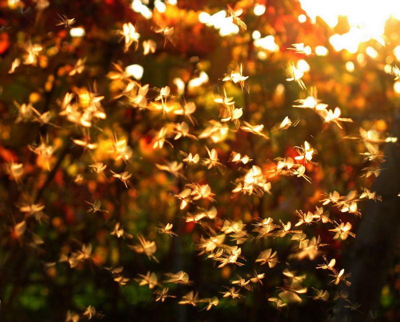letzter Tanz im Herbstenlicht...