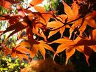 Letztes Aufbäumen der herbstlichen Farbenpracht