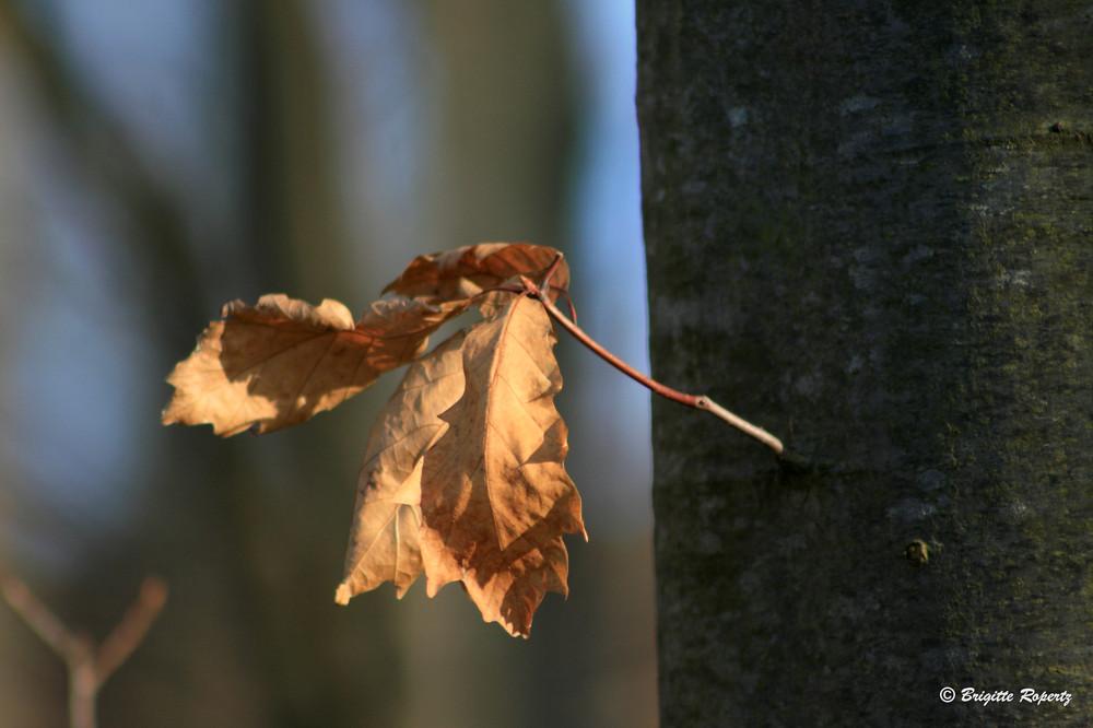 Letztes Blatt am Baum