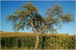 Letztes Foto vom Lieblingsbaum...