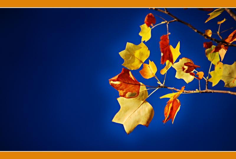 Letztes Herbst-Glühen