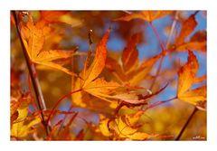Letztes Herbstleuchten