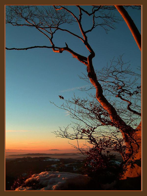 Letztes Leuchten der Sonne im Widerschein der Buchen vor der Winternacht