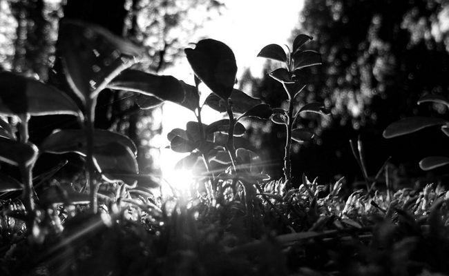 Letztes Licht des Tages