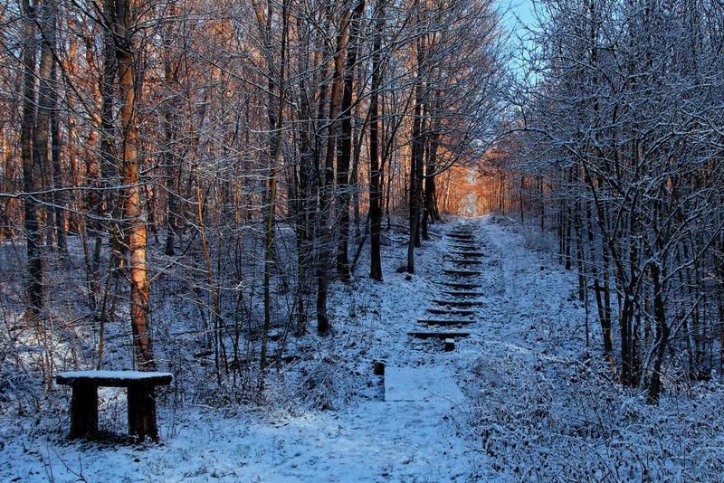 Letztes Licht für die Waldtreppe