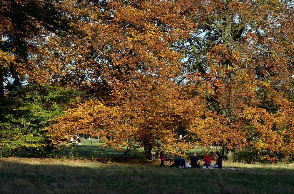 Letztes Picknick im Jahr?