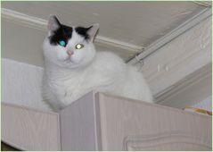 Leuchtaugen-Katze