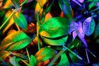 leuchtblätter