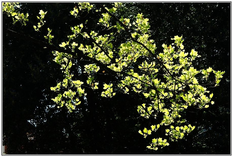 Leuchten des Frühlings