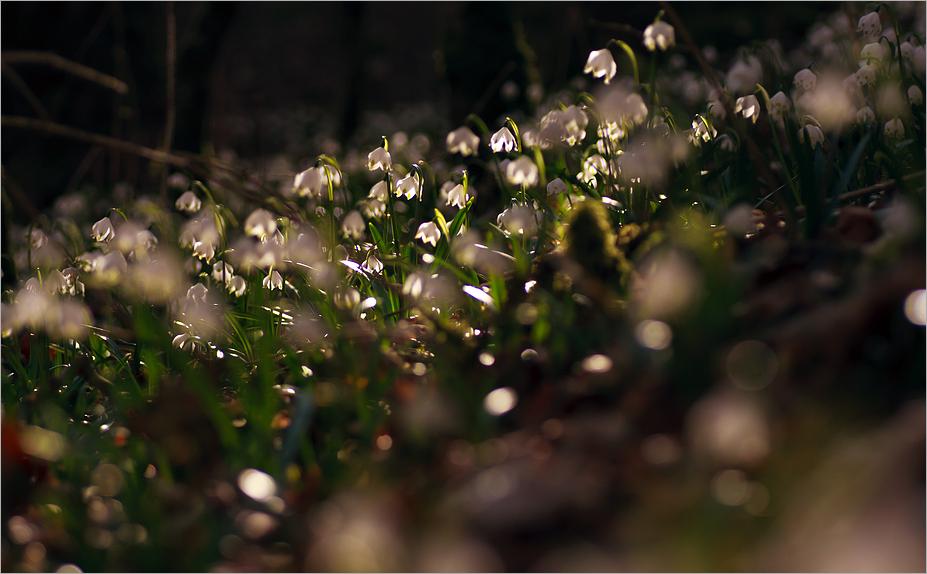 Leuchten im Walde