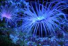 leuchtend blau