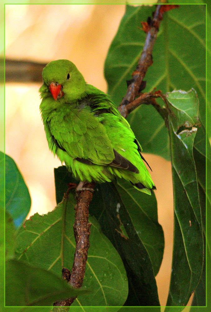 Leuchtend grüner Papagei