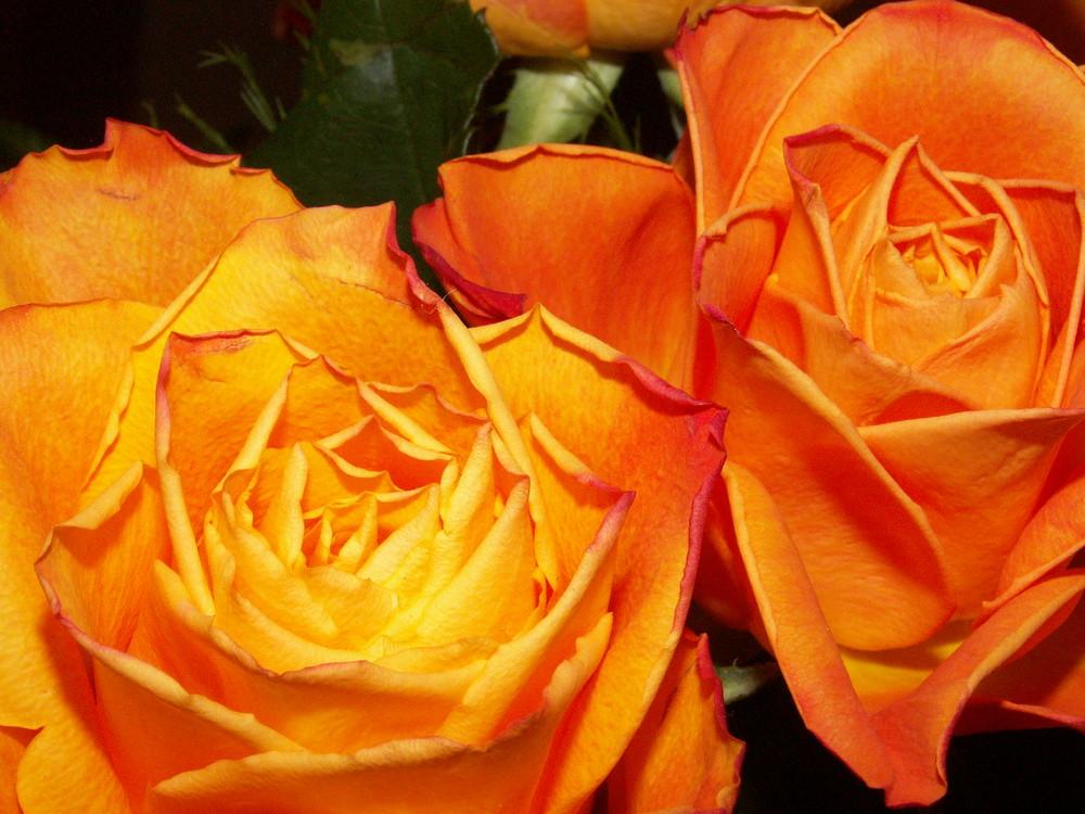 leuchtend orange