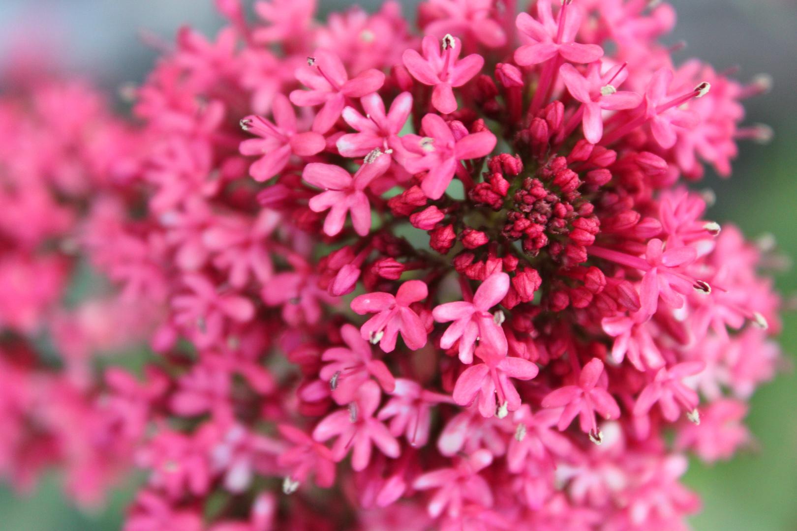 Leuchtend Pink
