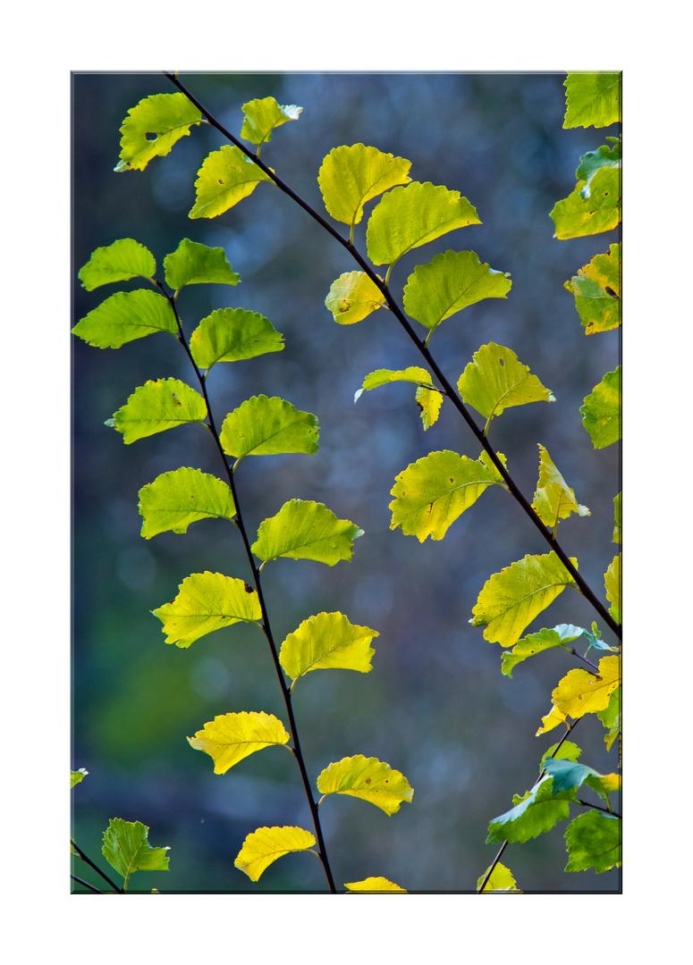 Leuchtende Blätter im Morgenlicht