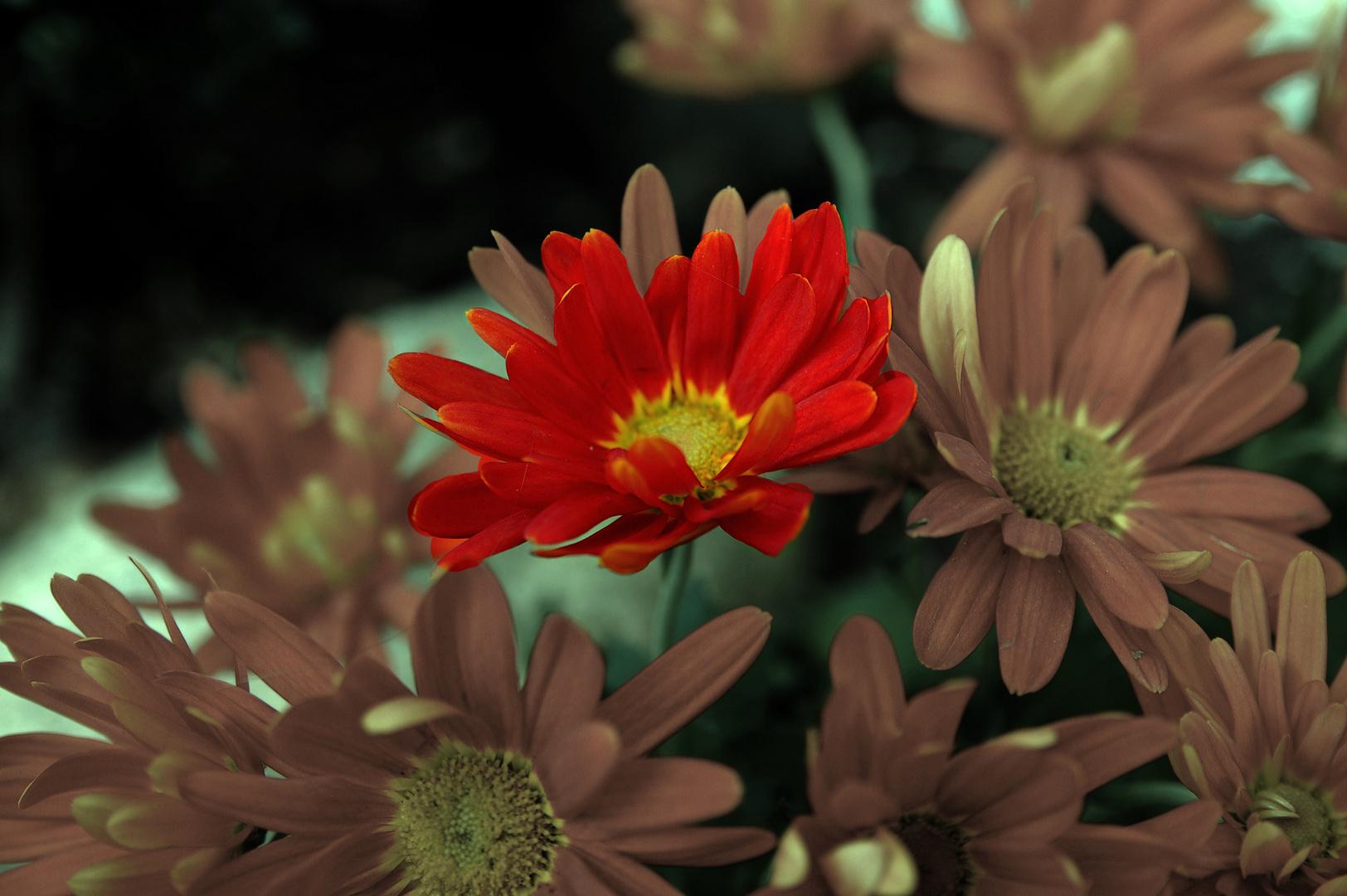 leuchtende Blüte