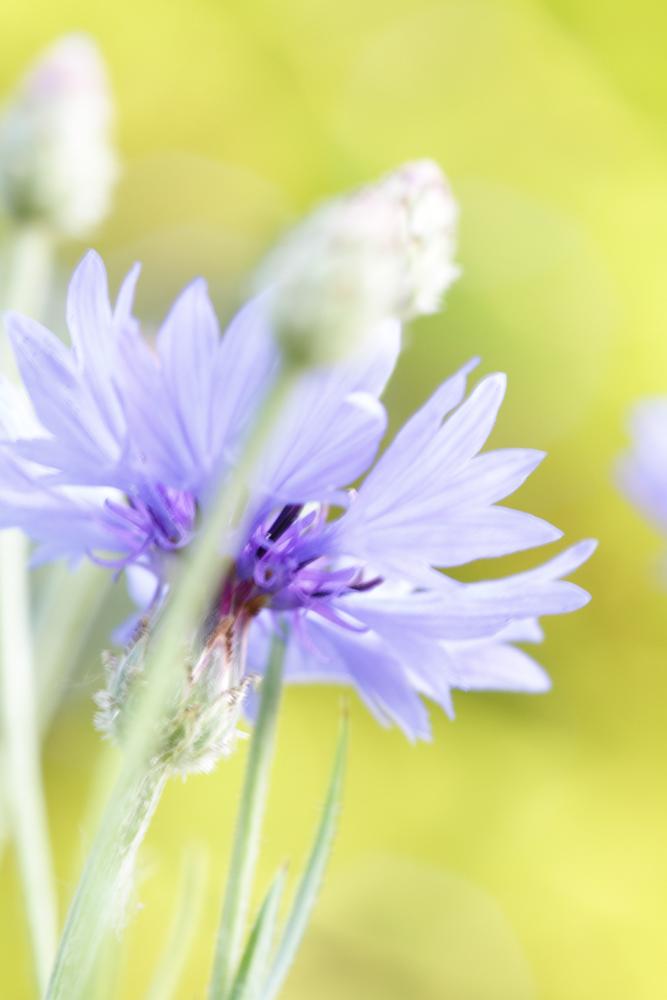 Leuchtende Blüten