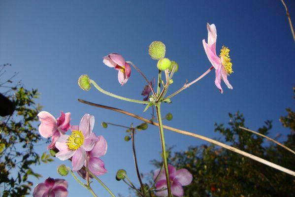 Leuchtende Blume
