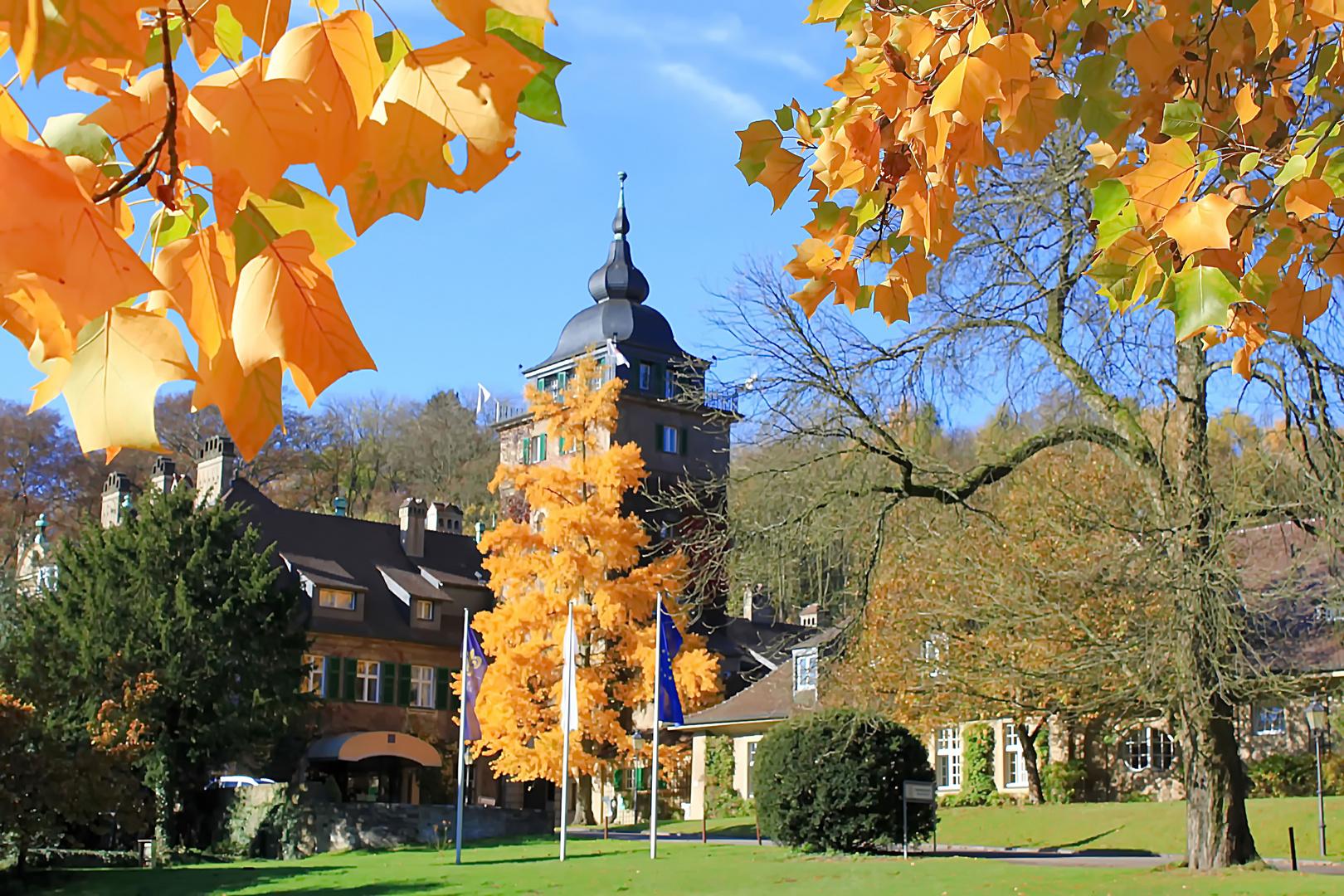 leuchtende Herbstfärbung