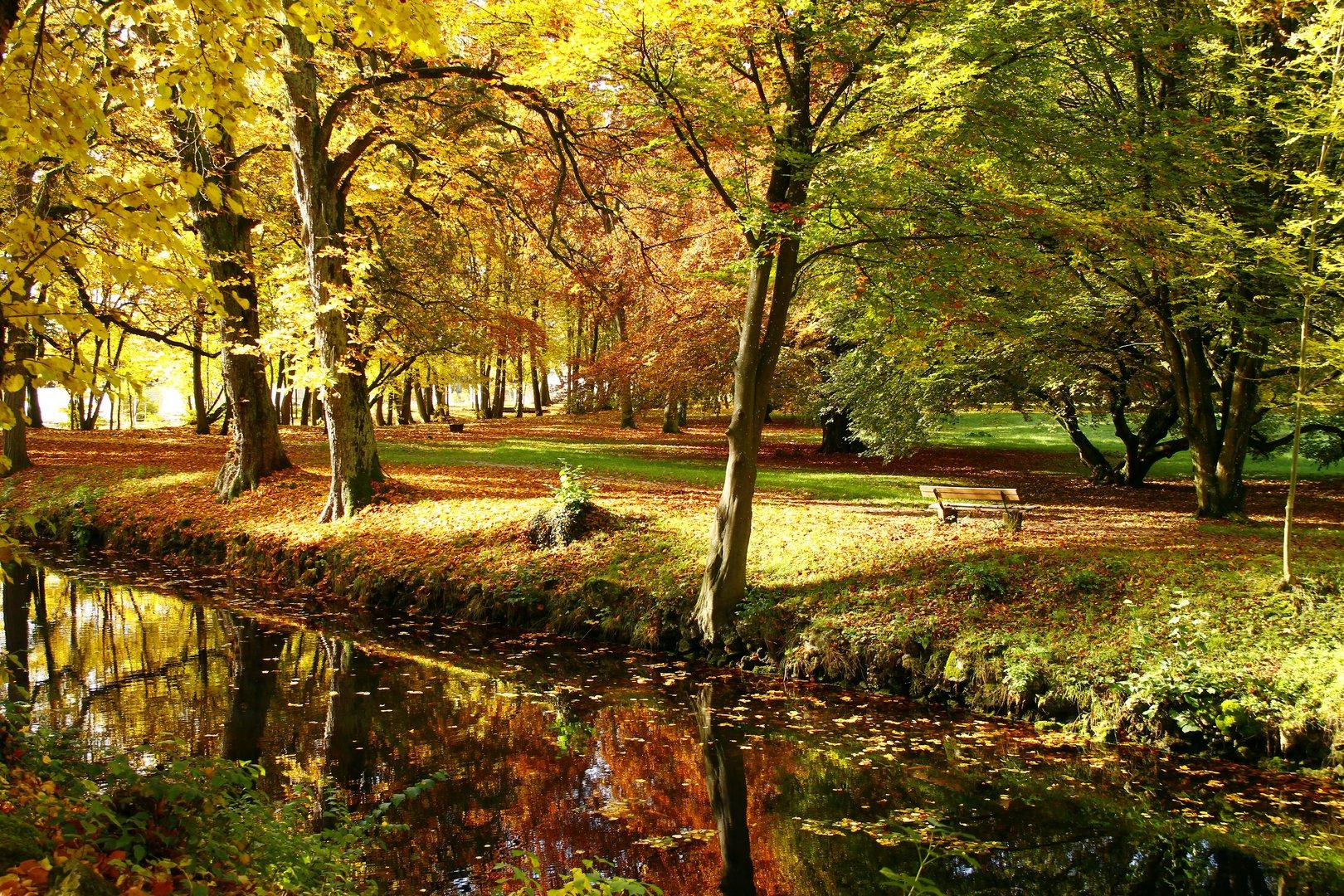 leuchtende Herbstimpression