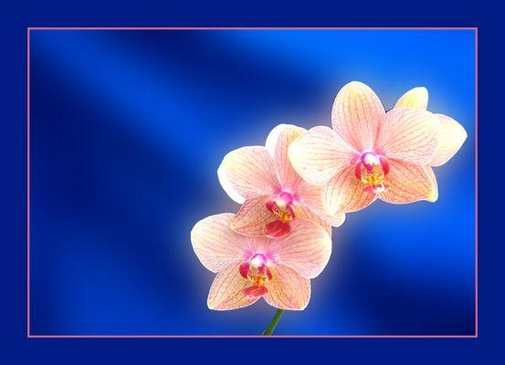 Leuchtende Orchidee